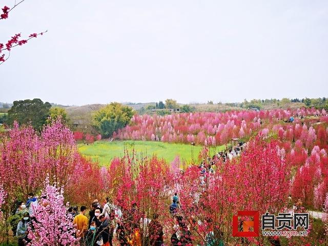 富顺县板桥镇千秋村.jpg