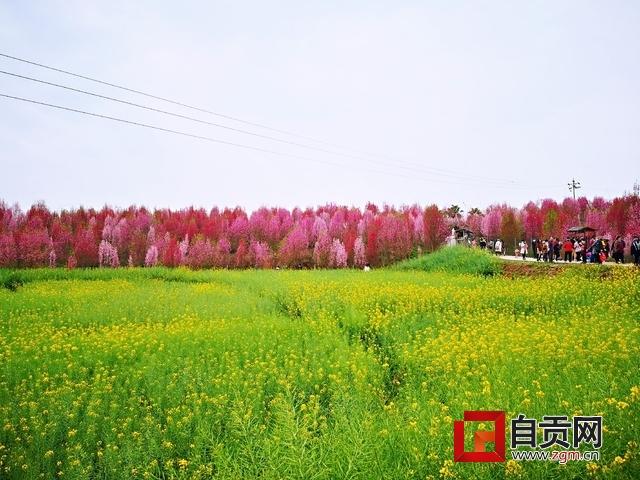 富顺县板桥镇千秋村桃花.jpg